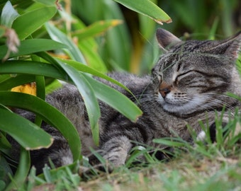 Photograph of a stray cat (comes in a grey matted frame)