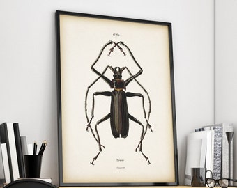 Beetle art print, Insect print, Antique Art, Insect illustration vintage, Download print, Digital print, Printable art, 8x10 art, 11x14 art