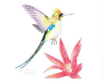 Print of Hummingbird Two