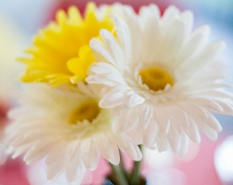 Daisies, color photograph of yellow and white dasies