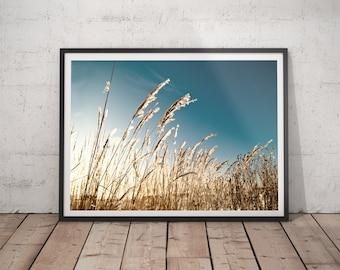 Winter, Bent grass, Nature, Landscape, Photography, Digital file, Wall decor.