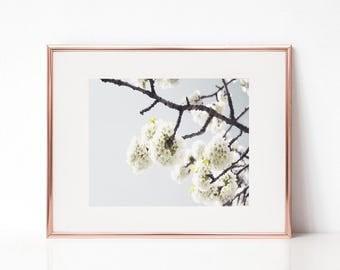 Flower Wall Art, Nature Photography Print, Printable Art, Flower Printable Poster, Nature Digital Print, Nature Flower Poster, White Flower