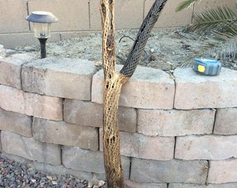 Cholla branch 25 tall with black fork 16