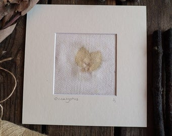 Original Eco-Printed mounted art on handmade paper with Eucalyptus leaves. Ready to frame. OOAK.
