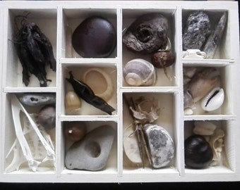 Witch Curio Collection Box - nature science fossils shells ornaments curiosity British witchcraft charms fetish