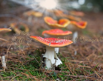 Toadstool, Digital backdrop, background, fantasy, fairy, elf, Composite, Stock