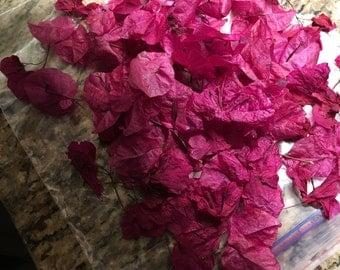 Tropical dried bougainvillea petals