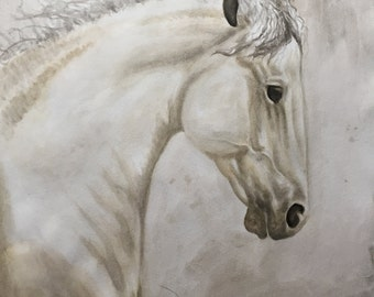 Andalusian Stallion in Watercolor