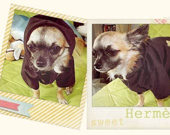 Sweet Hoodie for small dog