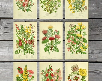 Instant download set of 9 vintage botanical prints, Scanned antique bookplates, Anne pratt illustrations, Poppy, Clover, Thistle, Foxglove