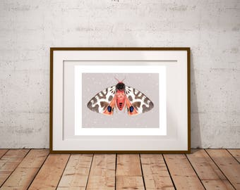 Wall Art Print, Moth Insect, Nature Garden, Butterfly, Scientific Illustration