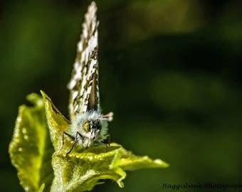 R U looking @ me butterfly