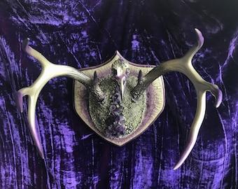 Jewelry Display * Crow Skull * Crystallized Skull * Animal Skull * Taxidermy * Deer Antler * Real Animal Skull * Animal Bones *