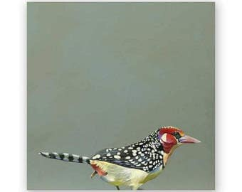 Red & Yellow Barbet - 10 x 10 Wings on Wood Decor