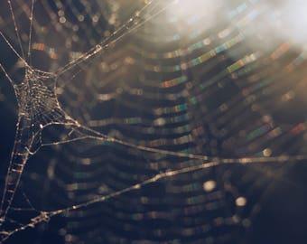 6x4 matte spiderweb print