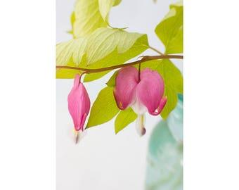 Bleeding Heart Flower Print, Floral Art Print, Pink Chartreuse Wall Decor, Flower Photography