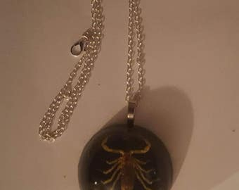 Real Scorpion, Scorpion necklace, Scorpion, Real insect, Taxidermy, Horror, Horror necklace, Ready to ship, MsFormaldehyde