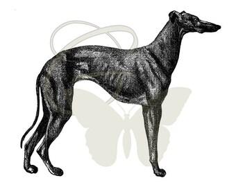 Printable Dog Transfer Greyhound Clip Art Artwork Digital Antique Illustration Download