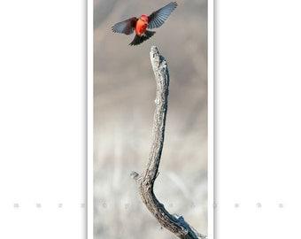 Vertical Artwork, Vermilion Flycatcher, Bird Artwork, Bird in Flight, Elegant Art, Red Bird, Wildlife Print, Birthday Gift, Murray Bolesta