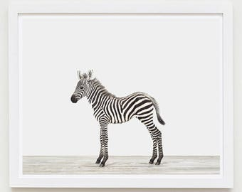 Baby Animal Nursery Art Print. Baby Zebra. Safari Animal Nursery Decor. Baby Animal Photo.