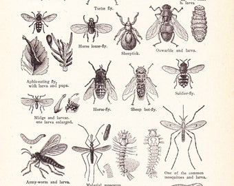 1920s Insect Print - Vintage Antique Home Decor Book Plate Art Illustration for Framing 95 Years Old
