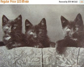 ON SALE Copyright 1900 Antique Black Cats Gothic Photo Postcard