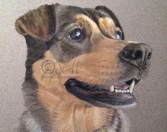 Mix Breed Dog 5x5 Inch Print