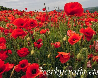Red Poppy seeds - TX native wildflower seeds - free shipping