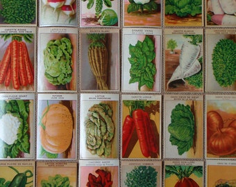 Botanical prints 24 vintage Labels for Vegetable Seed Packets (Set B)