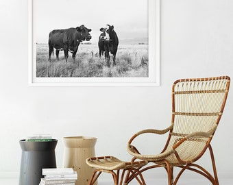 Chatty Cow Photograph in Black and White, Black and White Cattle Photography, Western Farm Art
