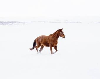 Snow Horse Photography | Winter Equestrian Wall Art