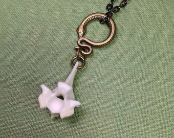 LAST ONE - Golden Osteo Serpent: Real Large Snake Vertebrae Pendant Necklace