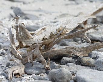 Driftwood on Rock Beach Art Photography on Blank Note Card – Beautiful Texture and Serene Image