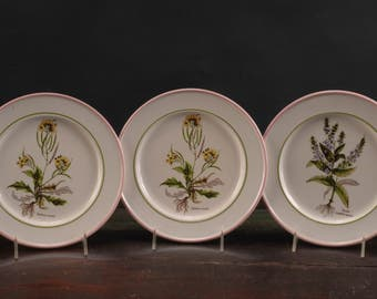 La Primula Plates with Botanical Studies, Italy