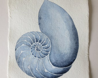 Chambered nautilus original watercolour painting illustration study natural history shell cross section
