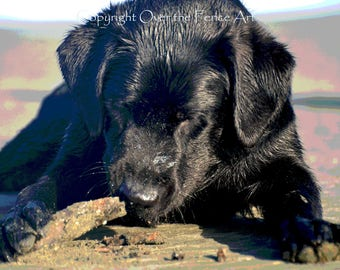 Black Labrador Puppy Salty Sea DogSandy Paws Photo Greeting Card