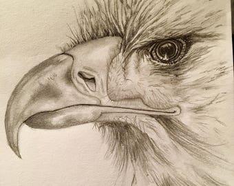 The Patriot - Eagle Sketch