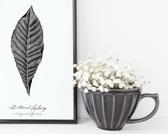 "Bitternut Hickory Tree Leaf Print | 8"" x 10"" Illustration 