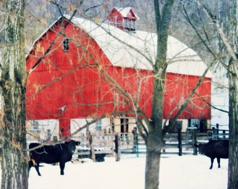 Red Barn Picture / Barn Art / Cow print / Greeting Card / Barnwood / Cottage Chic / Barn Salvage
