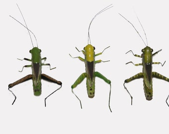 12 pc 2 1/4 Inch Fake Grasshopper with Clip (Jumper) Fake Bugs, Fake Insects,
