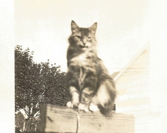 "Vintage Photo ""Herbert"" Tabby Cat On Clothesline Pole Found Vernacular Photo"
