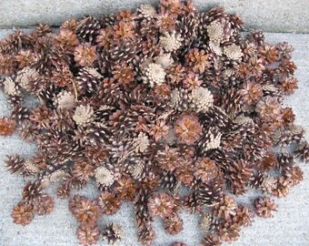 100 pinecones smaller sizes perfect for crafting 1 to 2 inches nature crafts woodlands wedding