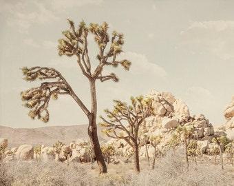 Joshua Tree Photograph, Southwestern Art, Vintage Nature Wall Art, Neutral Home Decor, Retro Desert Photography Southwest Landscape Picture