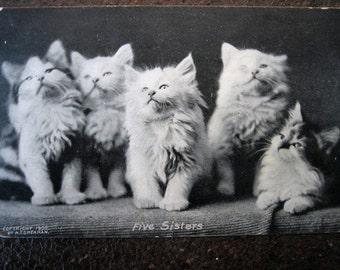"""Vintage Post Card """"Five Sisters""""  Cute Kittens"""