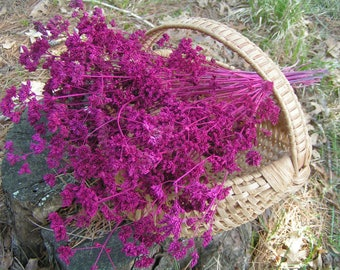 Magenta Preserved Oregano Flowers***Brilliant Color for Home Decorating, Crafts, and Wedding Arrangements***50 Sturdy Stems***Garden Grown
