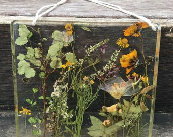 Preserved Nature Wall Hanging