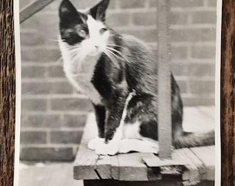 Original Vintage Photograph Creepin' Kitty