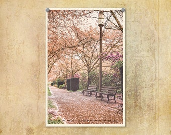 Oregon Photography | Salem Oregon | State Capitol Building | Pink Pathway | Springtime Cherry Blossoms | Oregon State Capitol | Pink Decor