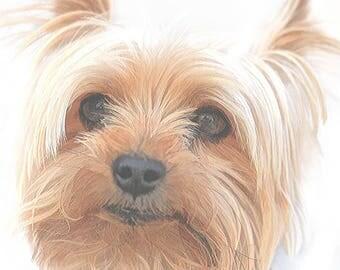 dog art print, Yorkshire Terrier print, dog lover gift, dog painting, dog picture, dog wall art, dog photography, animal print, animal art
