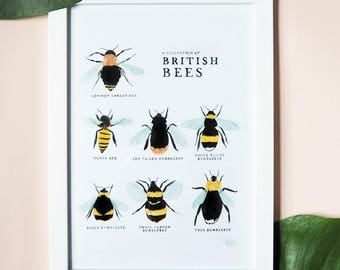 A Collection of British Bees PRINT A4 | Illustrated Summer Summertime Britain English Honey Insect Bumblebee Nursery Print Garden Gardening
